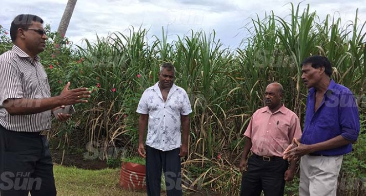 COVID-19: Cane Growers Urged To Plan Expenses