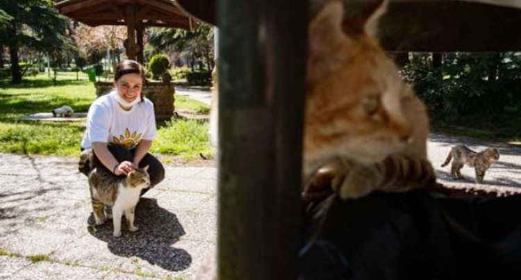 Local Officials Rush Help To Stray Animals In Istanbul During Lockdown
