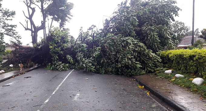 Fallen Tree along Queens Road at Navoci Village. Road is closed to all traffic.