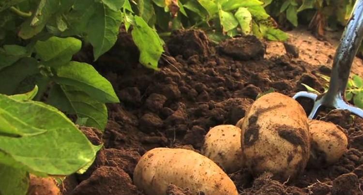 Grace Road To Launch Potato Farm