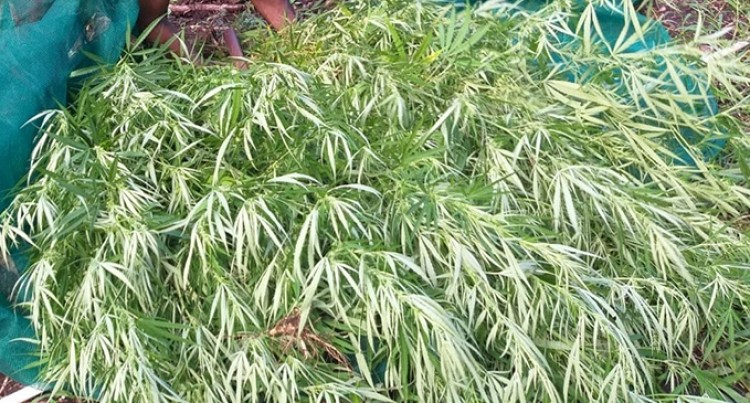Multiple Arrests Made In Vanua Levu After Police Raids Result In Discovery And Seizure Of Marijuana