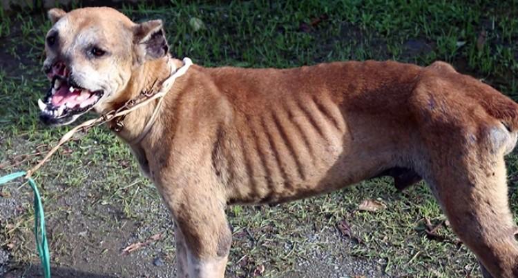 $2000 Reward For Information On Pig Hunters Injuring Dogs