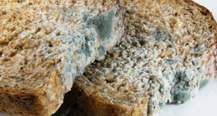 Concerns Over Prominent Bakery Selling Stale And Mouldy Bread Surfaces