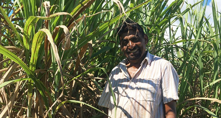 Mudaliar Aims High For This Year's Cane Cutting Season
