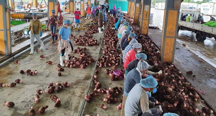 Business Normalises For Top Navua Crop Exporter