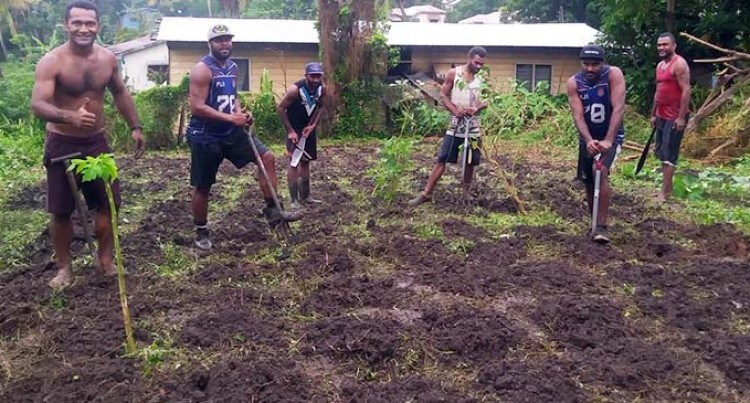Six Western Men Take Barter For Better Fiji By Storm, Trading Work For Groceries