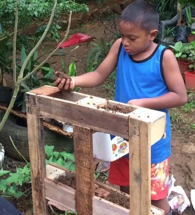 Eight year-old Joshua Matainaniu tends to his backyard garden at Wakanisila, Kalabu, on June 21, 2020. Photo: Kelera Sovasiga