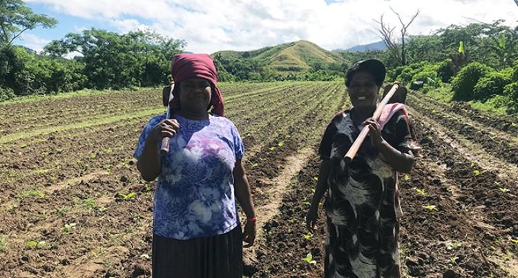 19 Women Take On Tobacco Farming In The Sigatoka Valley