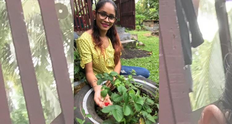 Backyard Gardener Mani Has Eyes For Strawberry