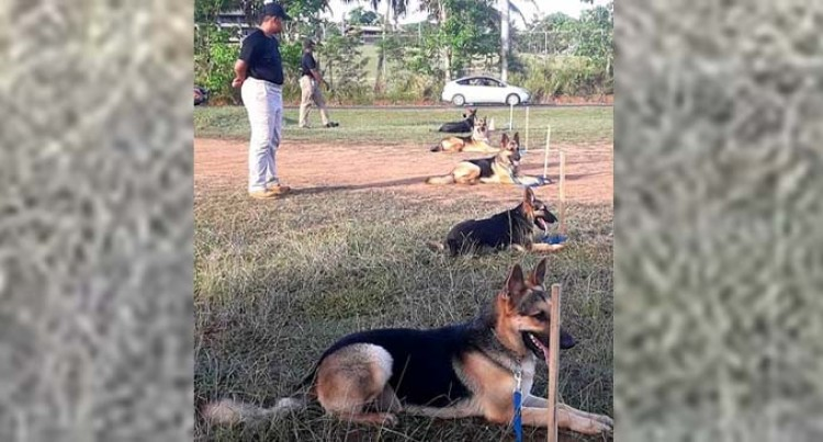 Kadavu Man Invests In Dog Training, Starts Business For School Leavers