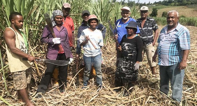 Bread And Butter Foremost For Women Cane Cutters
