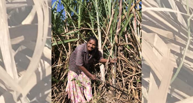 The Only Female Cane Cutter In Siberia, Labasa Prevails