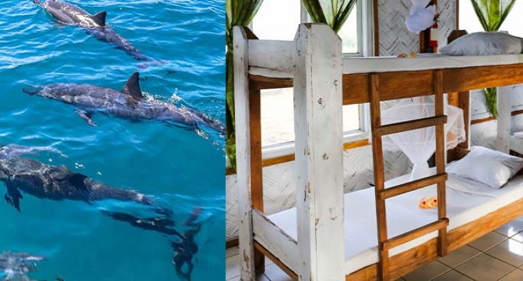 Let's Go Local: Natalei Eco Lodge's Dolphin Watching