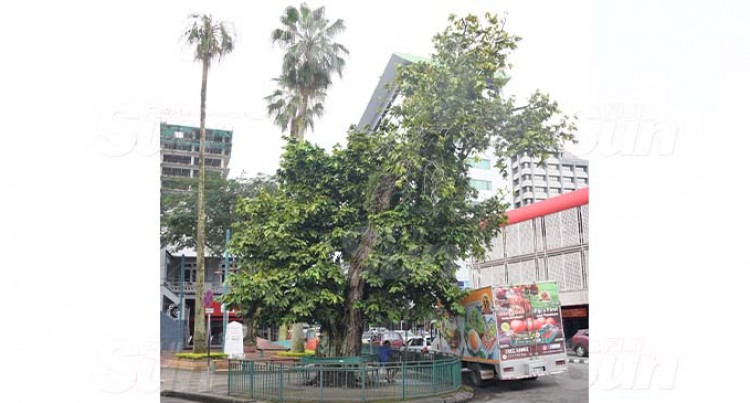 Century Old Historical Trees Grace City Landscape