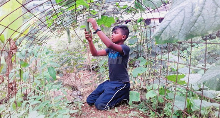 10-Year-Old Ayush Dedicates Time To Backyard Gardening