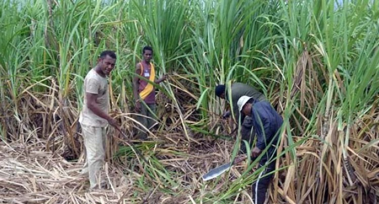 Bogus Agents Target Cane Farmers