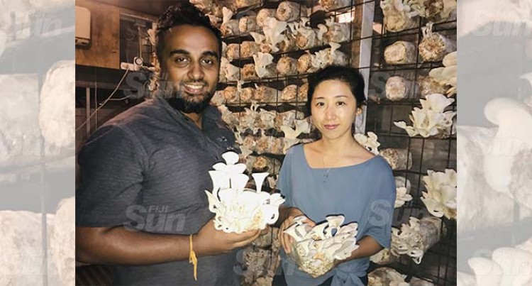 Mushroom Farm Yields First Returns
