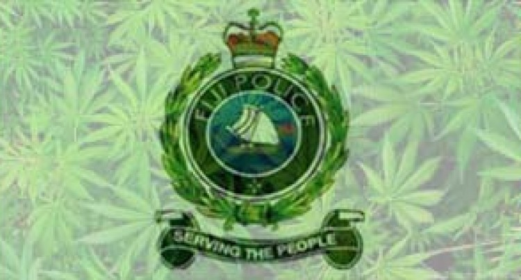 Thirty Marijuana Plants Uprooted From A Farm In Cakaudrove
