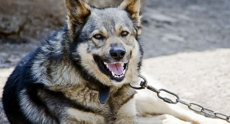 Police Will Distribute K9 In The North