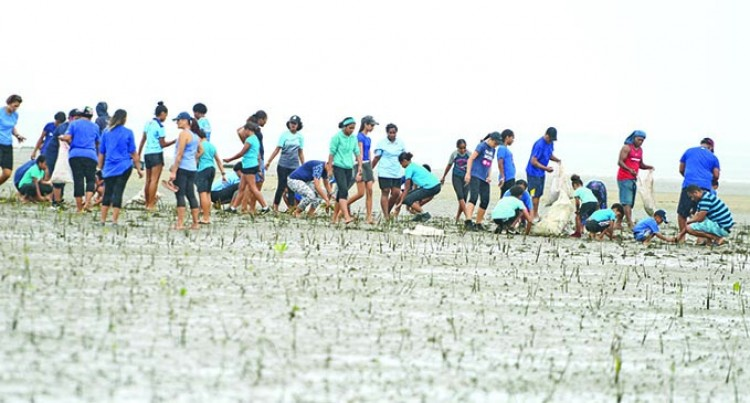 St Anne's Primary Students Plant 8000 Mangroves