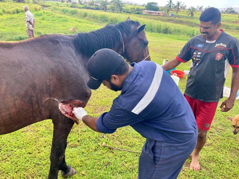 Senior Veterinary Officer - West Dr Beato tends to injured livestock in the North