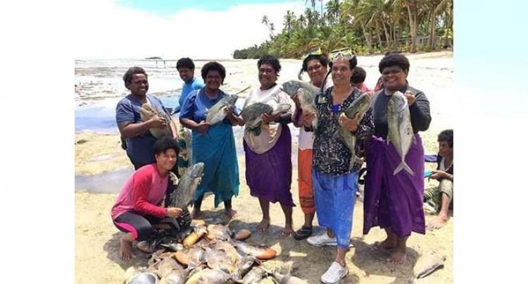 Fish Galore At Vadravadra, Gau Yavirau