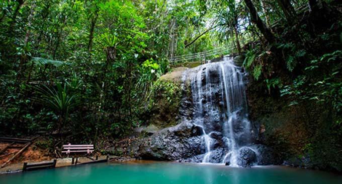 Colo-i-Suva Forest Park.