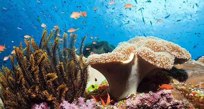 Namena underwater Marine Reserve. Source: https://www.afar.com/places/namena-marine-reserve