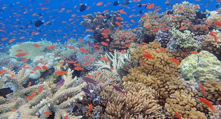 Post TC Yasa, Our Marine Life Flourishing