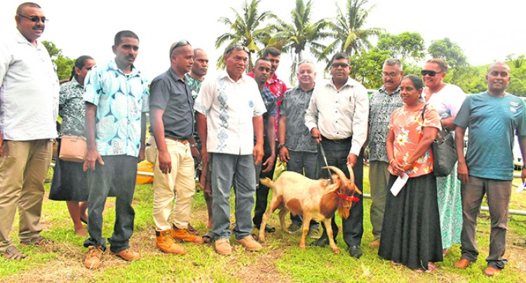 Ministry Releases Cross Goat Breeds