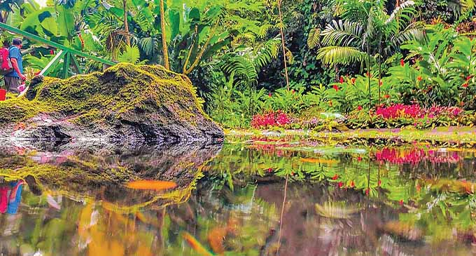 Natural pond in the Garden of the Sleeping Giant in Nadi.
