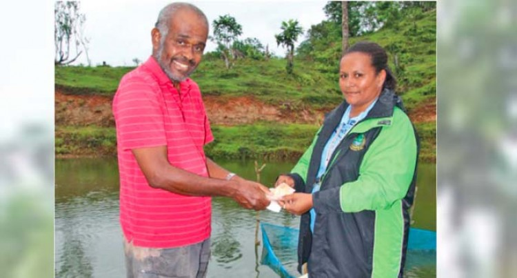 Madraitabua Breaks New Ground With Tilapia Export To New Zealand