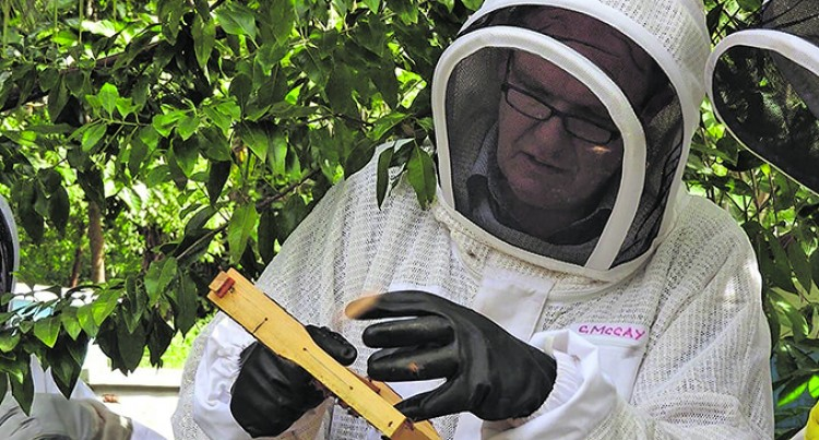 Crystallised Honey Good To Eat, Says Beekeeper Expert