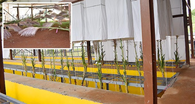 Despite The Pandemic The Sugar Research Institute Presses To Grow The Yield