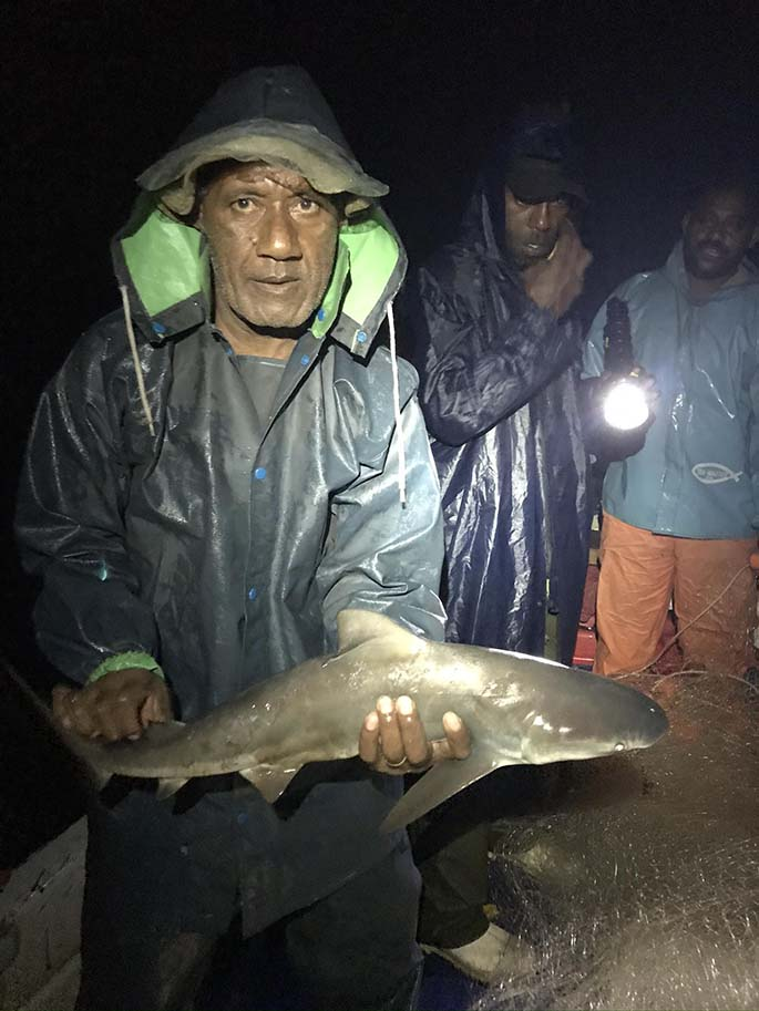 Community rep Tomasi Bula about to release a juvenile bull shark back into the Dreketi river. Photo: WWF-Pacific / Andrew Paris.