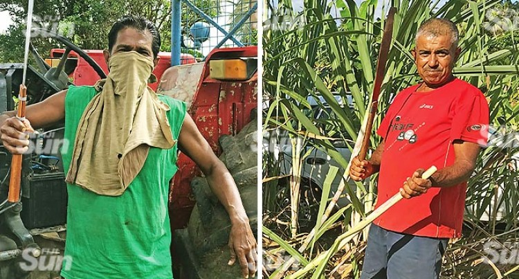 Shortage of Labourers A Thing of the Past: Labasa Cane Farmer