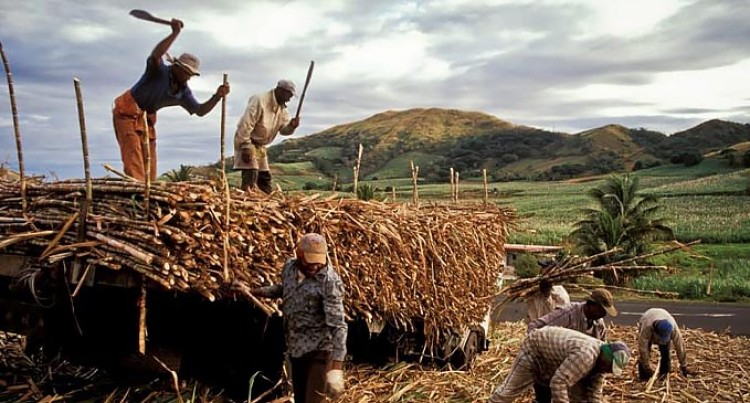 Cane Growers Council Expects An Optimistic 2021 Harvesting Season