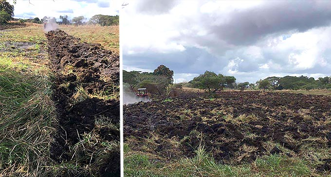 Salanieta's Marseu's land in Nadi being prepared for farming.