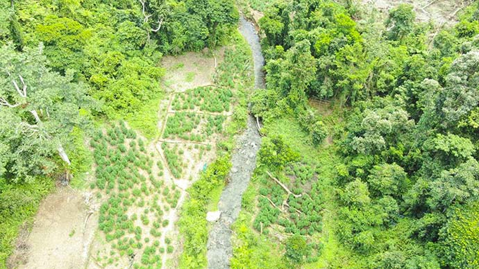 Drone photo of one of the 27 farms in Kadavu.