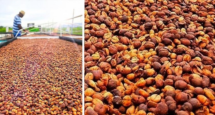 Rise in Local Coffee Beans