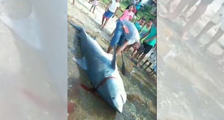 Villagers On Shark Alert